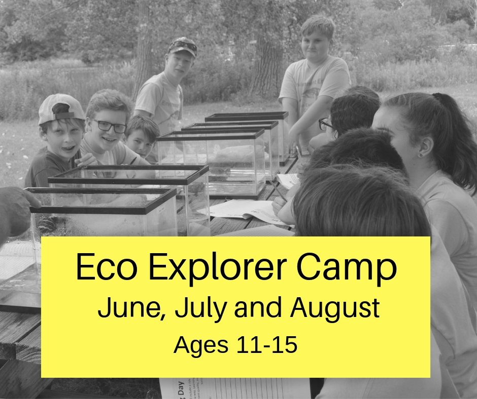 Eco Explorer Camp 2019