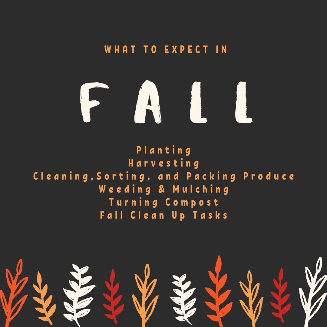 What to expect in fall