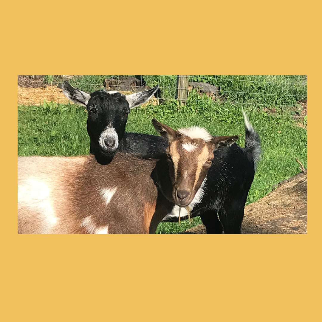 30 minute farm tour and visit with the Goats