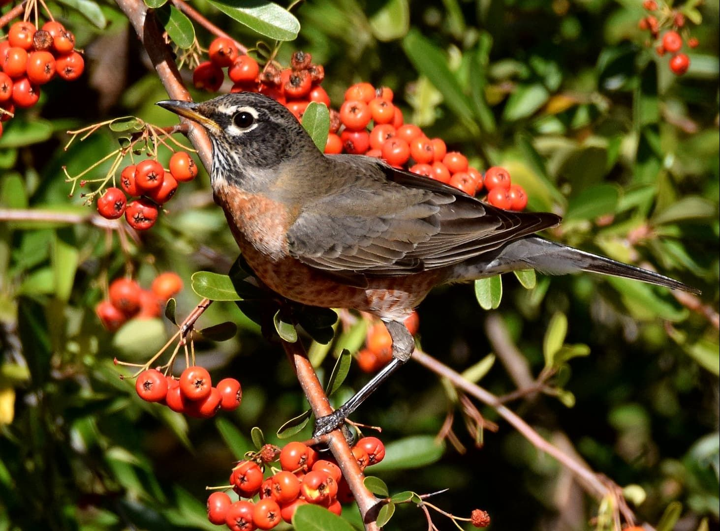 Holiday Gift Giving that Helps Birds