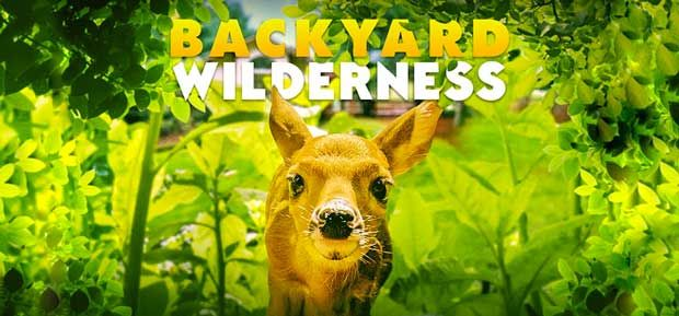 Backyard Wilderness giant screen film