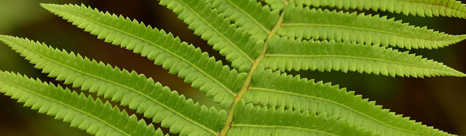 A beautiful green plant