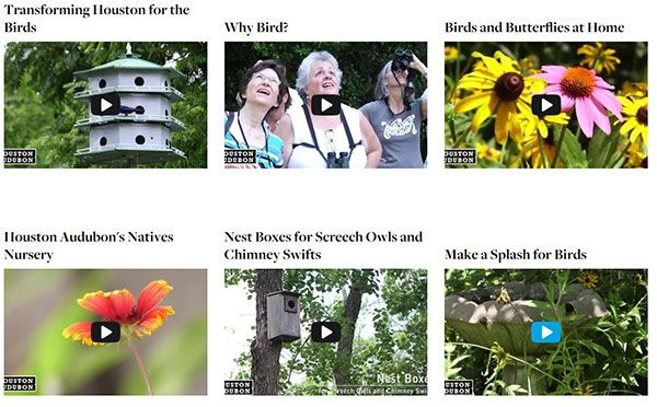 New Bird-Friendly Videos