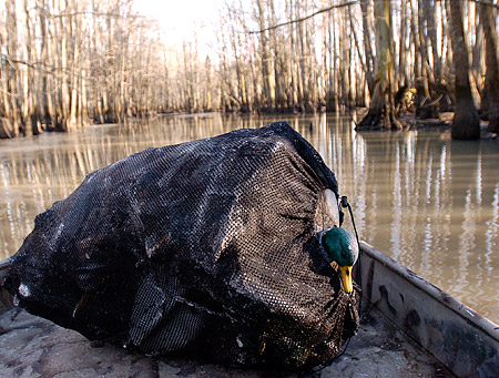 Should I use less decoys in the late season?