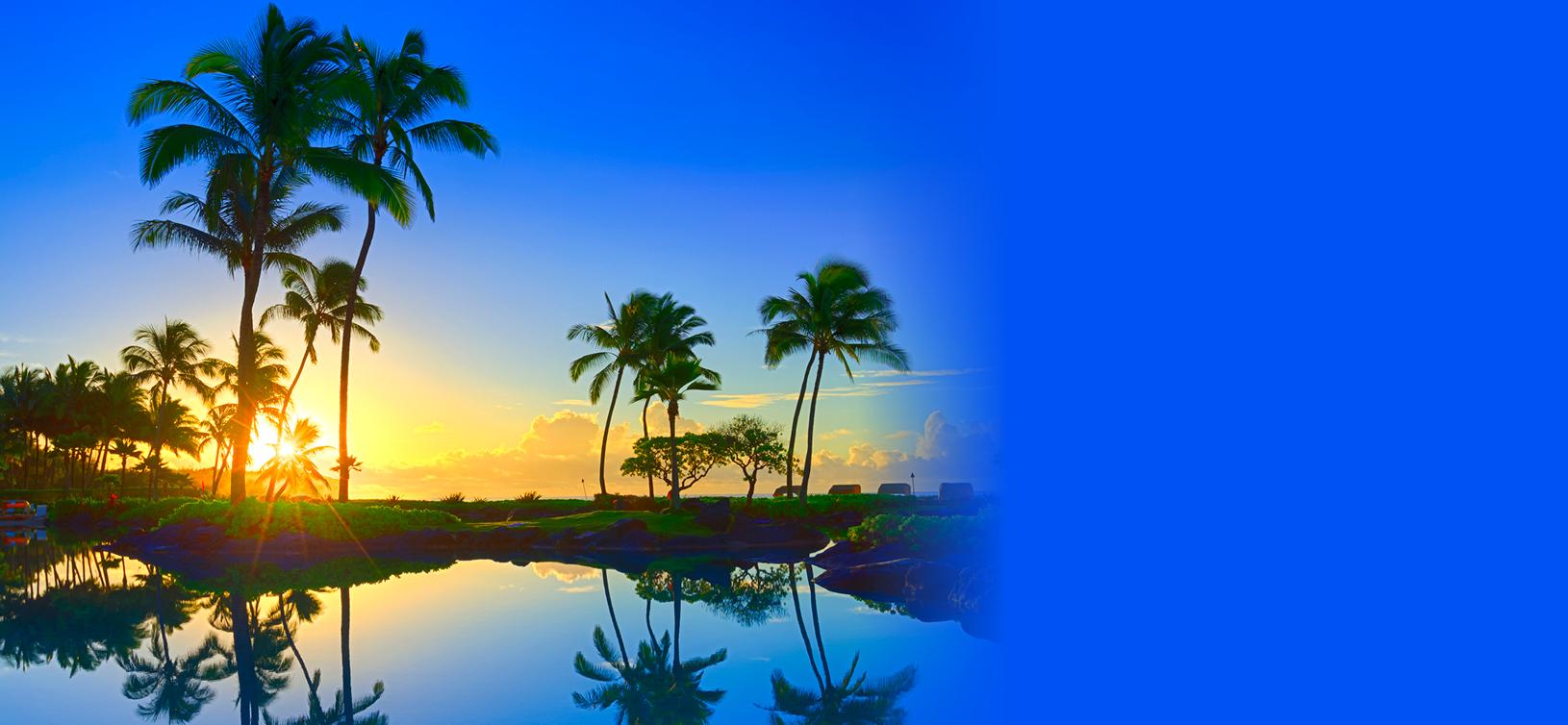 Catch the Aloha!