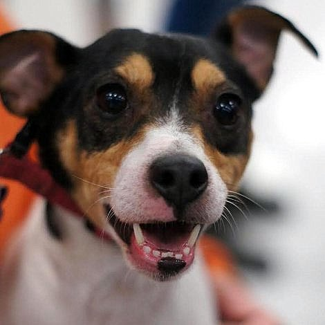 Mary & Bruce Bennet want Mack to find his Forever home!