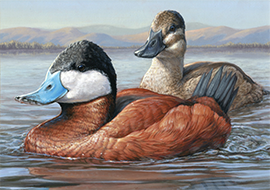 New York Artist Wins U.S. Duck Stamp Competition