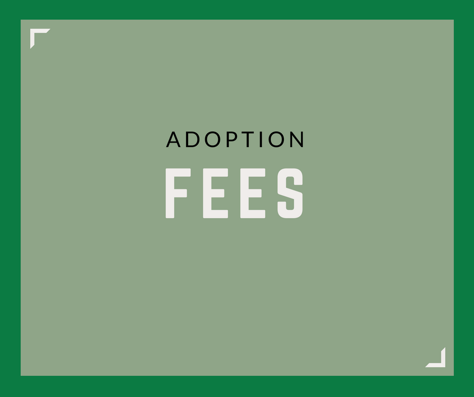 Adoption Service Fees