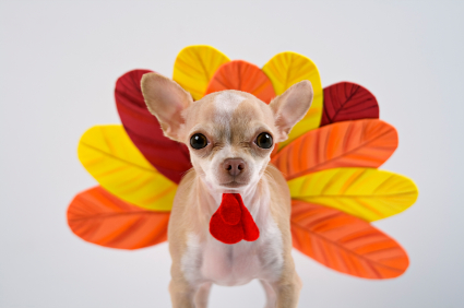 TCHS is closed for Thanksgiving!