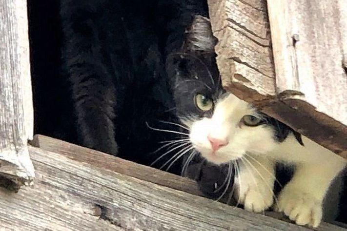 Barn Buddies - Working Cats