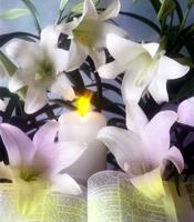 Funeral Reflection for Sister Miriam Schmitt