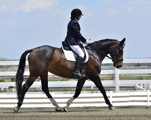 The Dressage Foundation Awards Continuing Education Grant To Instructor Dolly Hannon