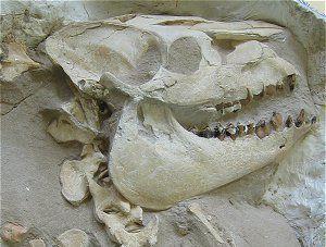 Nebraska County Fossils