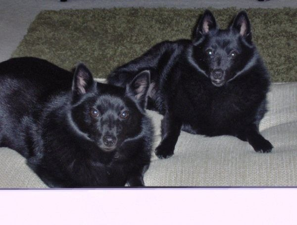 Emme and Boo (Ebony)