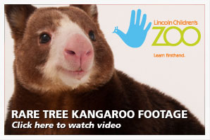 Tree Kangaroo Footage