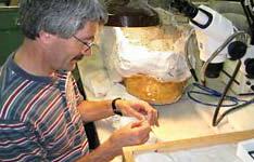 Explore the Fossil Prep Lab