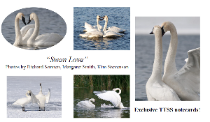 "With a membership donation of $100 or more, you can receive a free exclusive TTSS ""Swan Love"" notecard set of 5 trumpeter swan images"