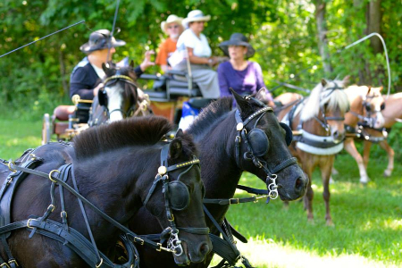Morven Park's Carriage Pleasure Show Offers Fourth of July Spectacular