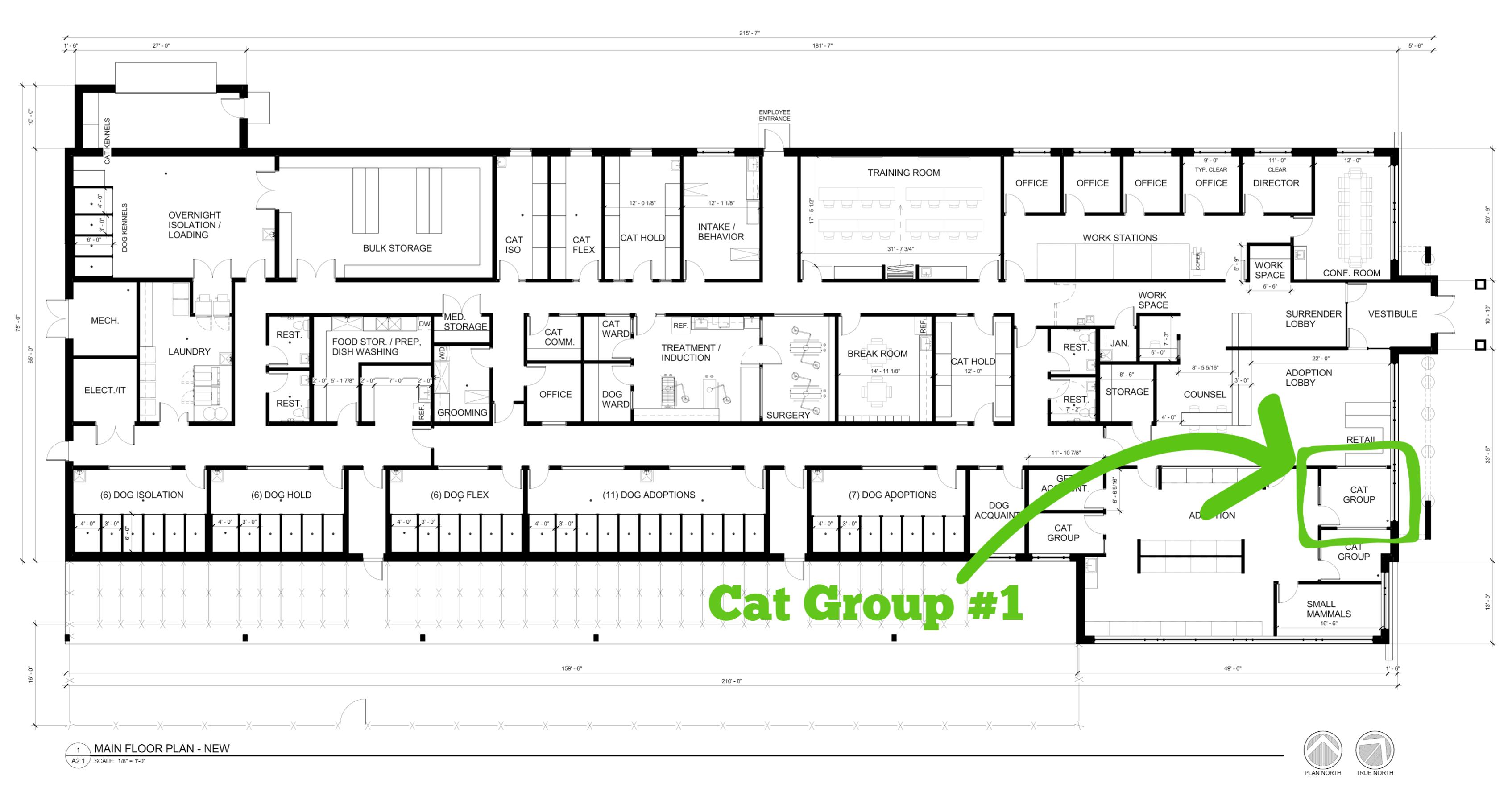Cat Group #1