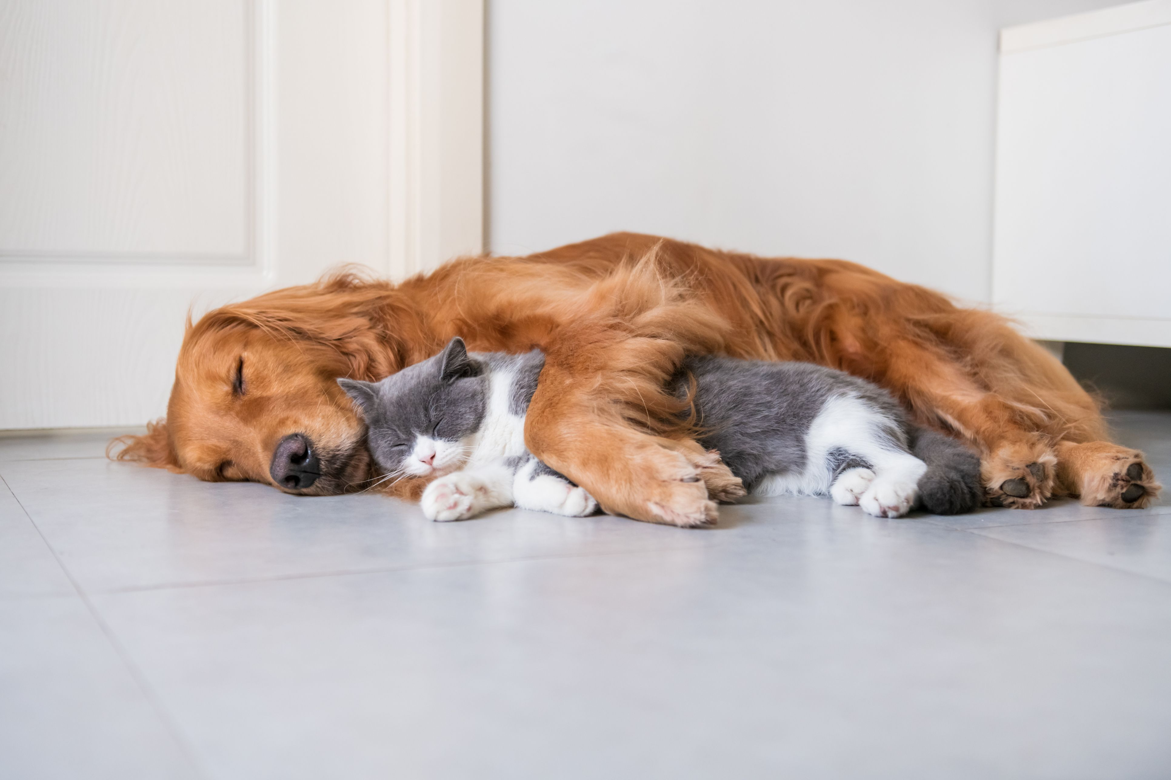 SPCA COVID-19 Information