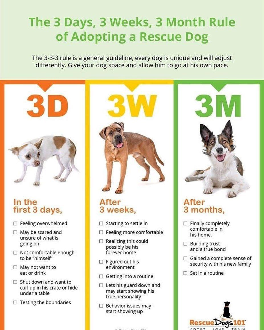 The 3 Days, 3 Weeks, 3 Months Rule of Adopting a Rescue Dog