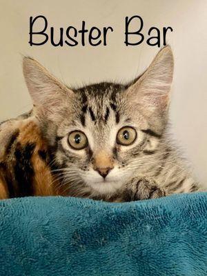 BUSTER BAR