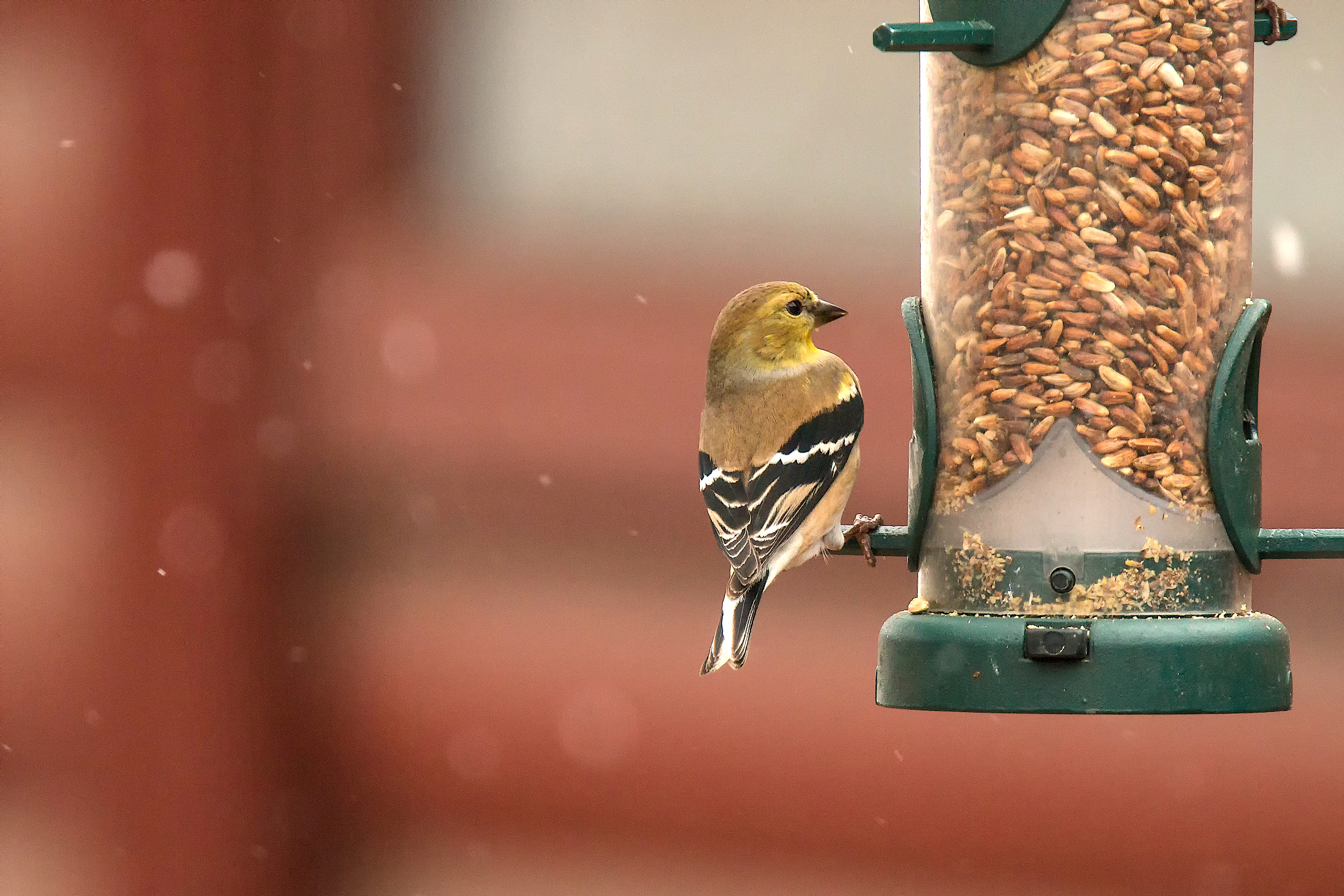 Winter Bird Seed Sale
