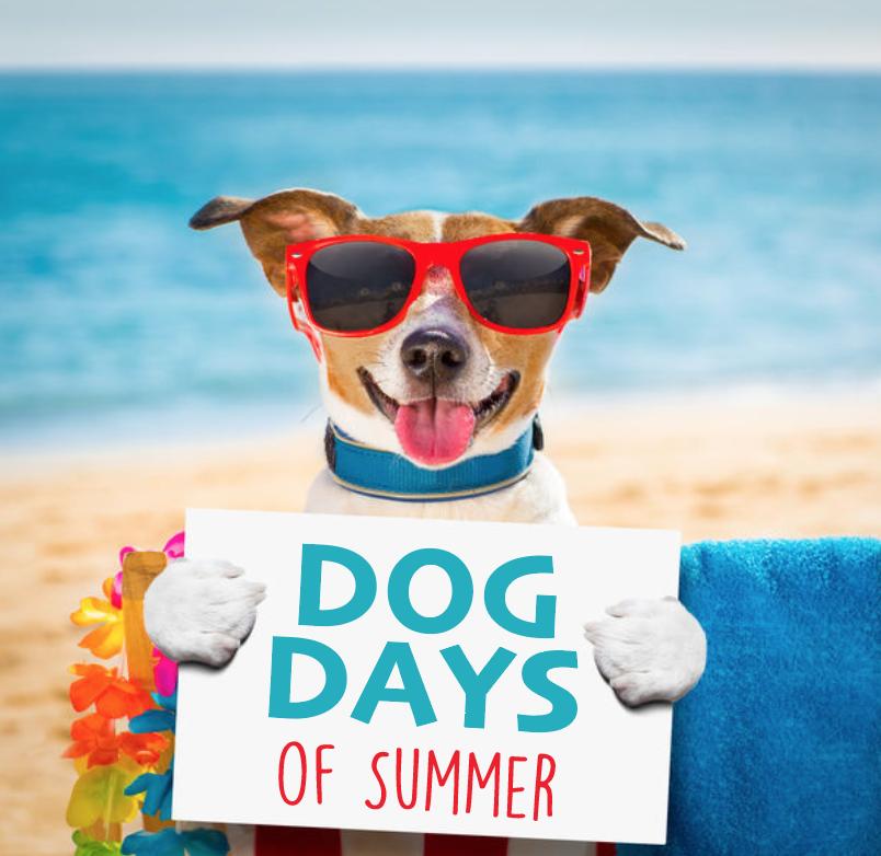Dog Days of Summer Dog Walk
