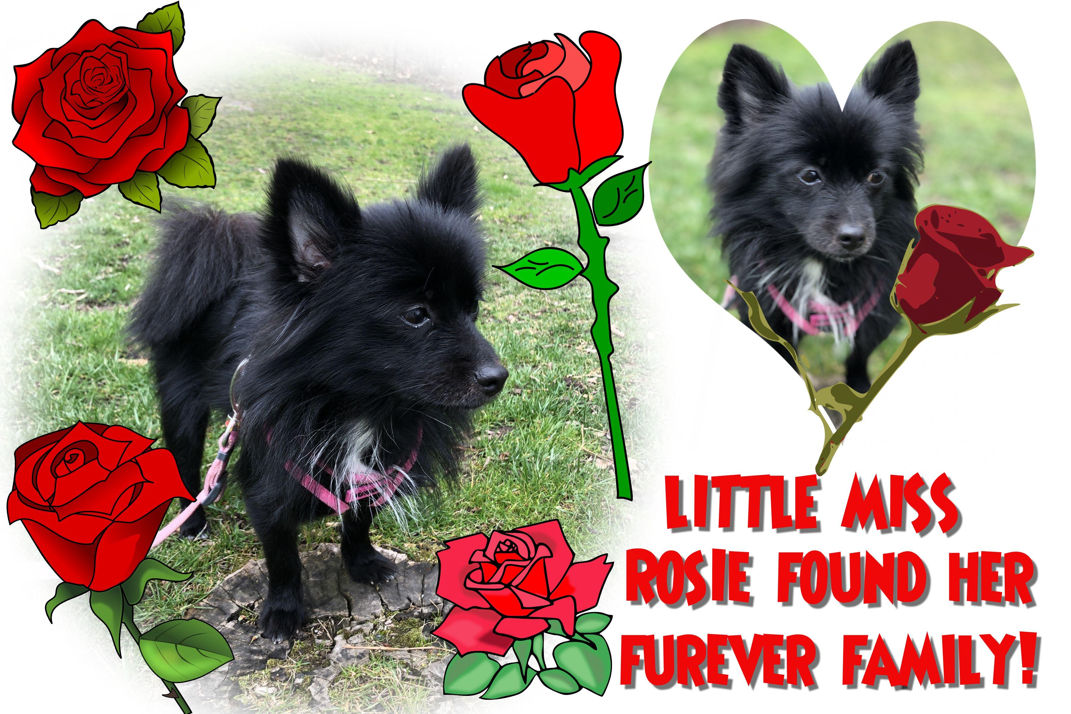 3/31/20: Rosie (aka Mama Rose)