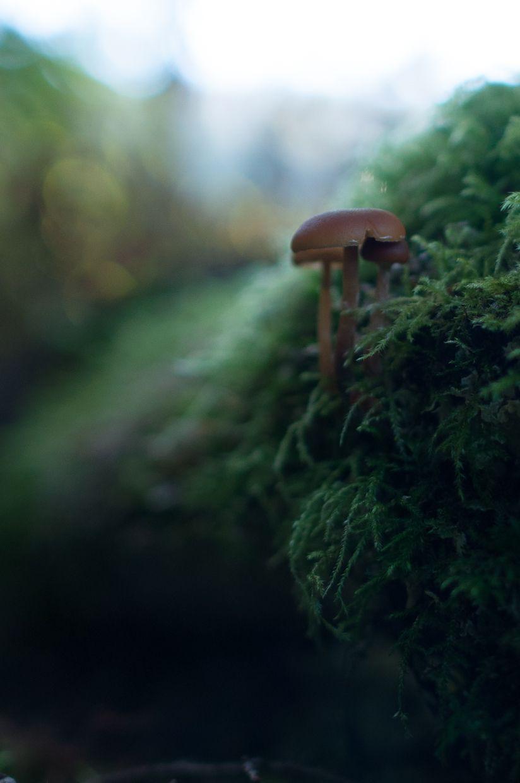 Ward Lake 17, Mushrooms in Moss