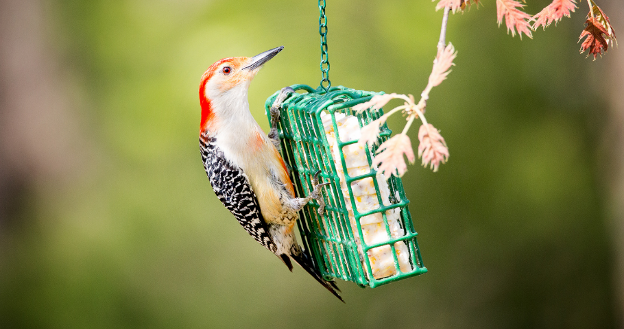 The September Bird Seed Sale - stock up for winter!