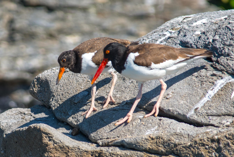 Shorebirds and Sea Creatures