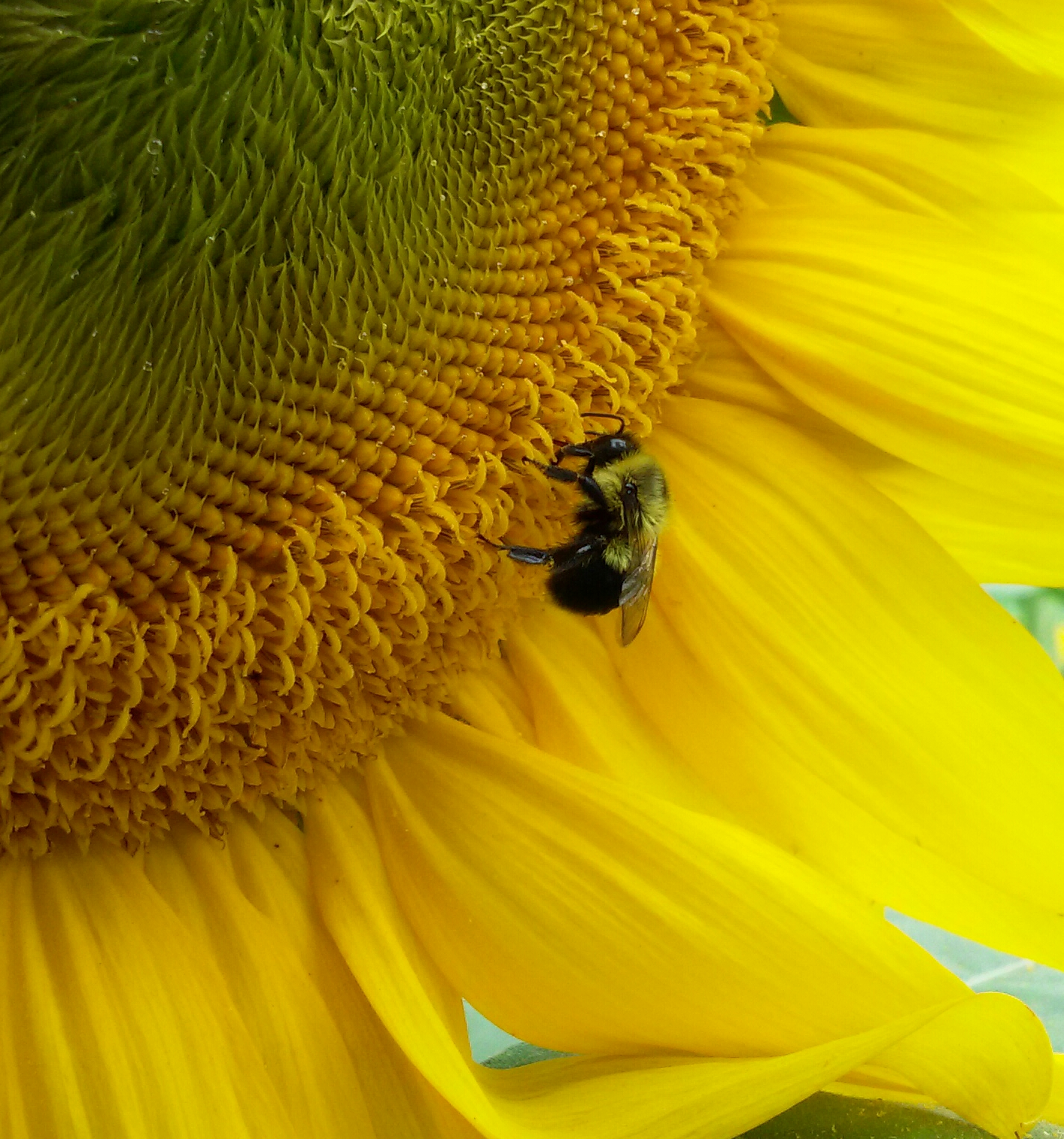 Rhode Island is Buzzing About Pollinators!