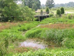 Wetland Wranglers