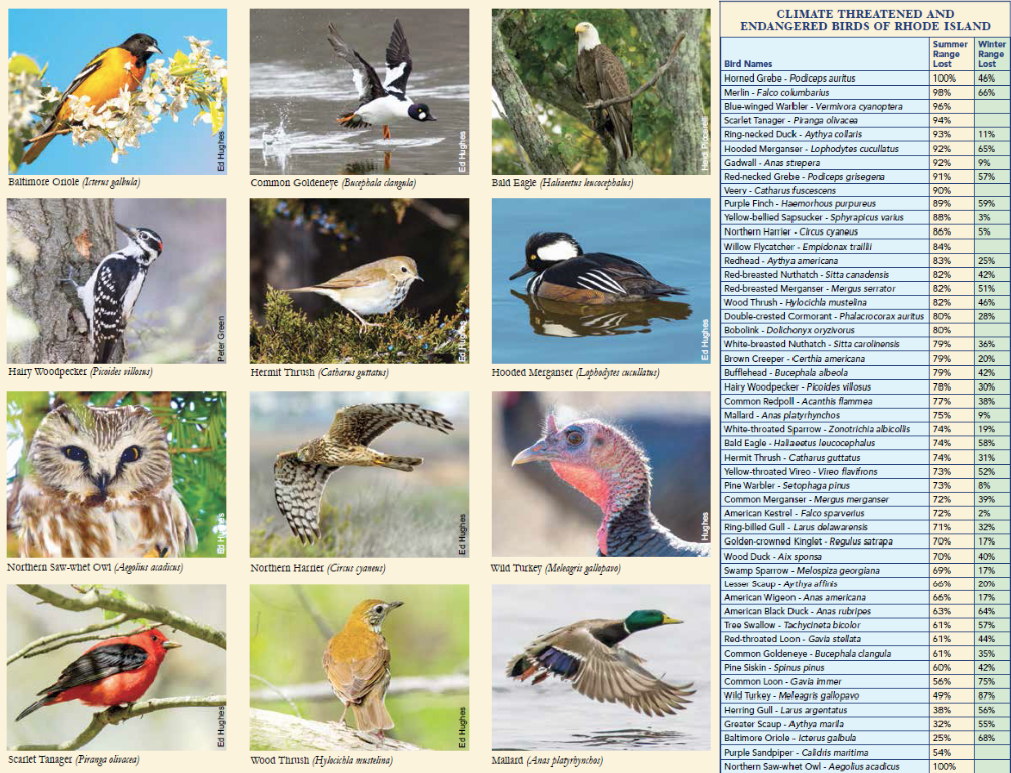 Birds on the Brink