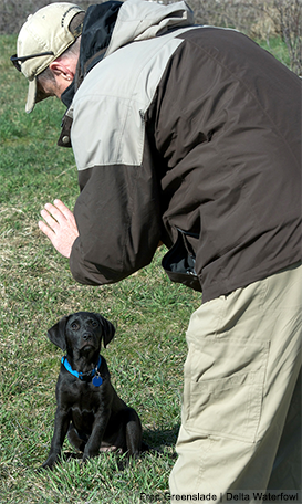 Becoming a Better Dog Trainer — Part 2: Patience With Your Pup