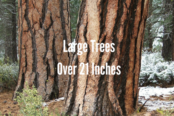 Large Trees