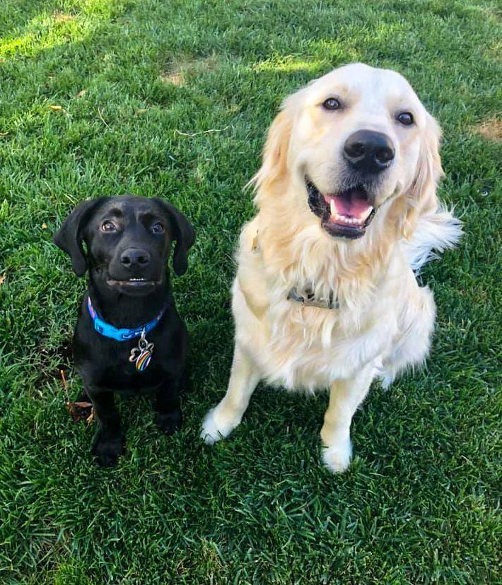 Service Dogs: Purebred vs. Rescue Dogs