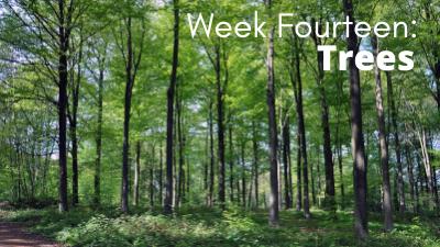 Audubon at Home: Week Fourteen - Trees