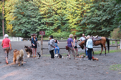 Big Dogs & Little Dogs Came to Walk 'n Wag 2015