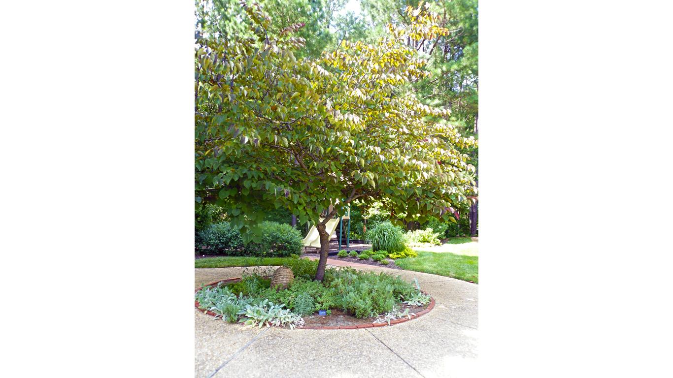 Silver-leafed Garden 2