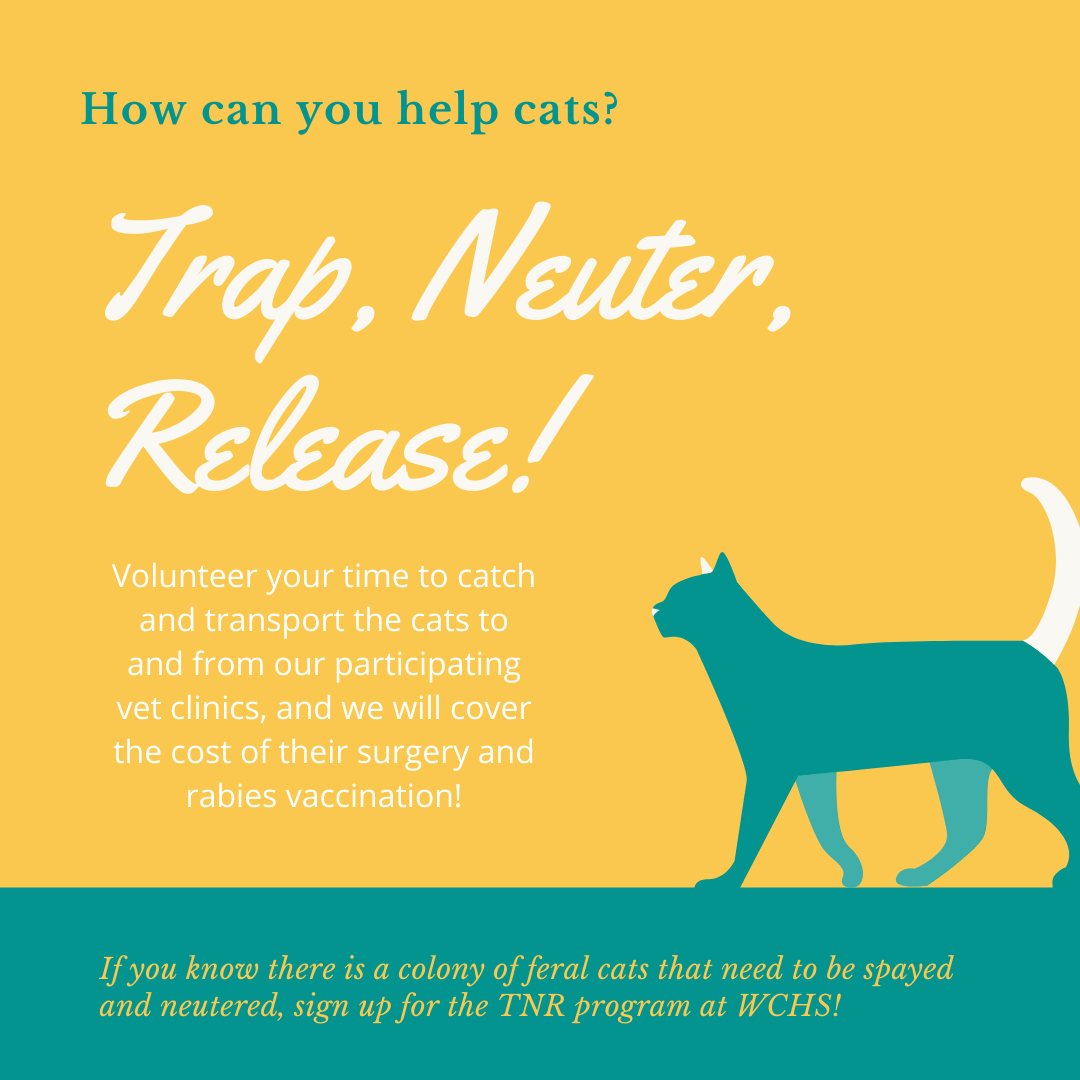Trap, Neuter, Release