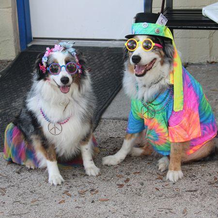 Frankie & Daisy