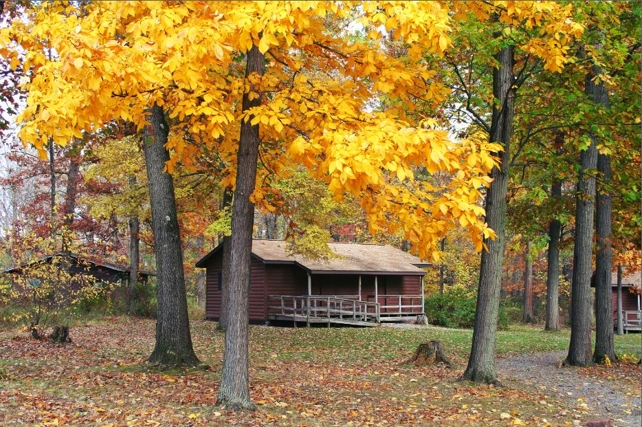 Cabin Red Pine Fall