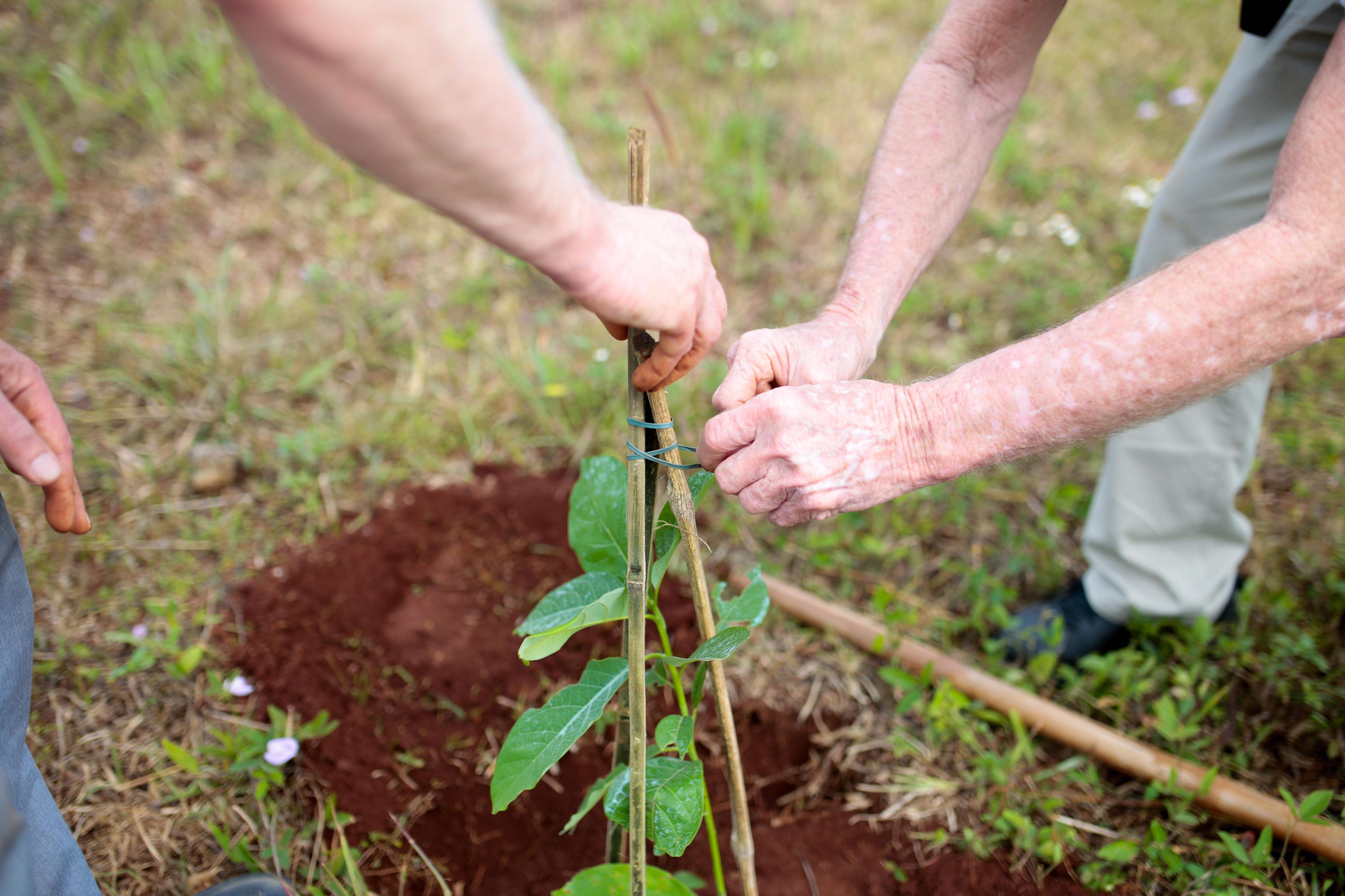 Veteran's Day Tree Planting
