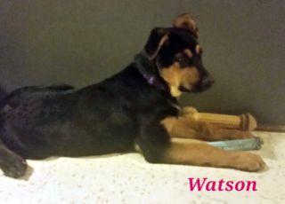 Watson - ADOPTED