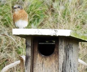Bird Box Monitoring