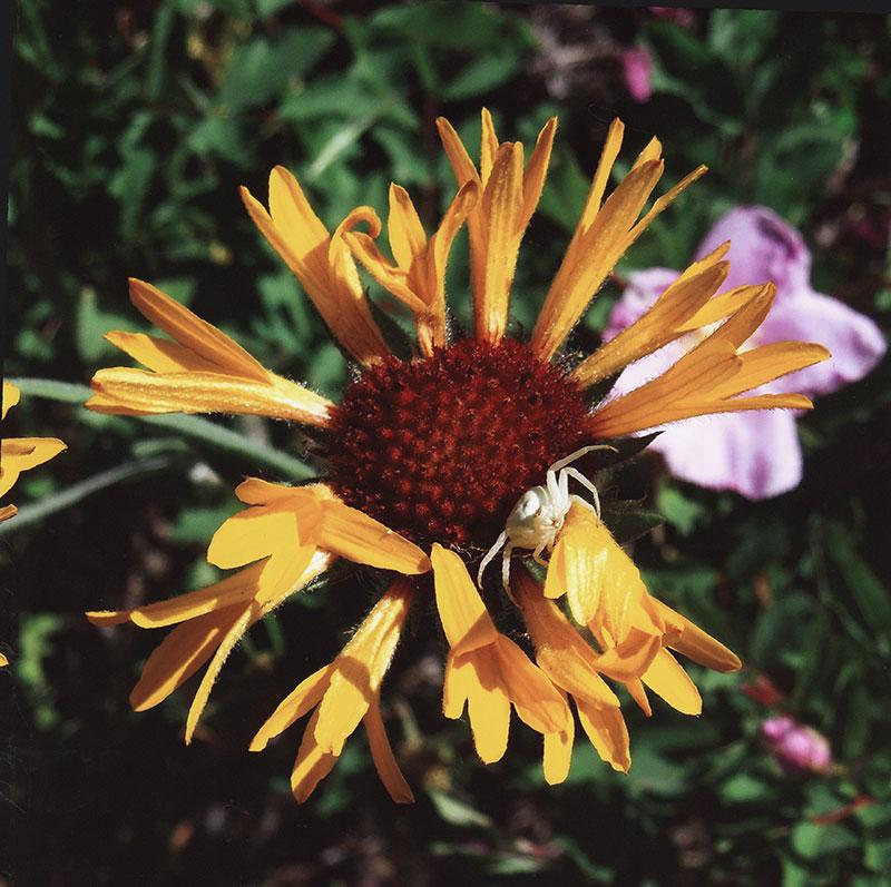 3rd - Flora