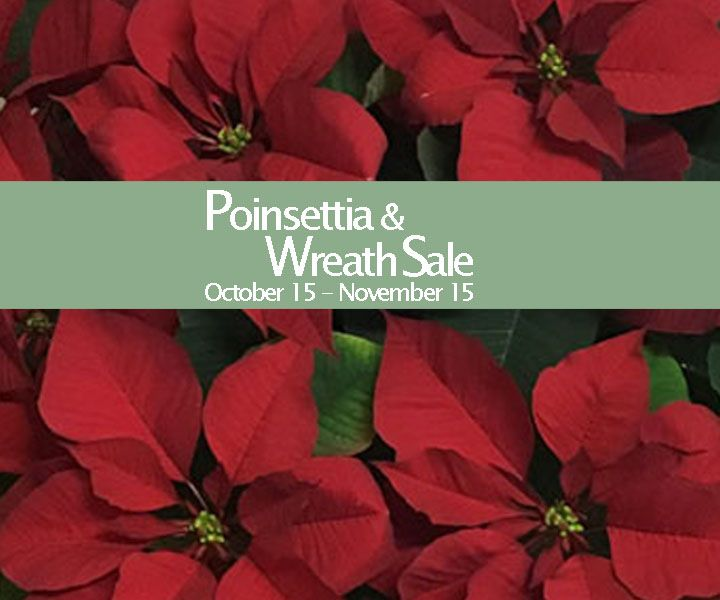 Fresh Poinsettias & Wreaths Bring Holiday Cheer