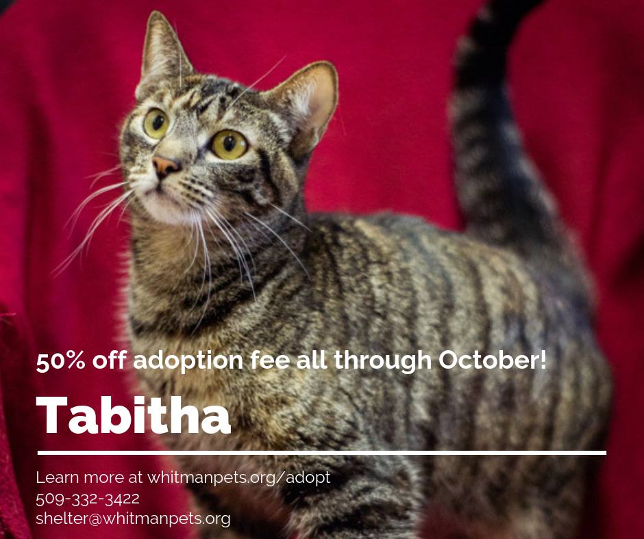 Tabitha is still looking for a home